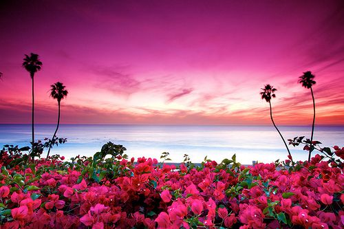 Bougainvillea & pink skiesPink Flower, San Clemente, Colors Photography, The View, Beautiful, Tropical Paradis, Sunsets Pictures, Seaside Sunsets, South Beach