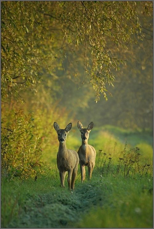 A beautiful buck and eight does lived their life on my farm. Ninety acres was set aside and left to grow wild just for a habitat for all the creatures...I allowed No Hunting so they were all safe and free...