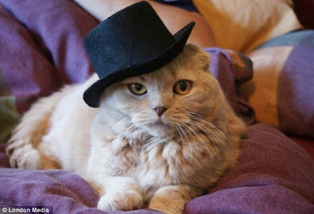 The hat sat on the cat  Hilarious snaps of pets in comedy headgear become  web hit 402494a428d2