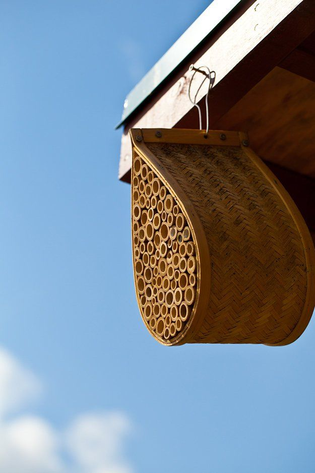 mason bee house instructions