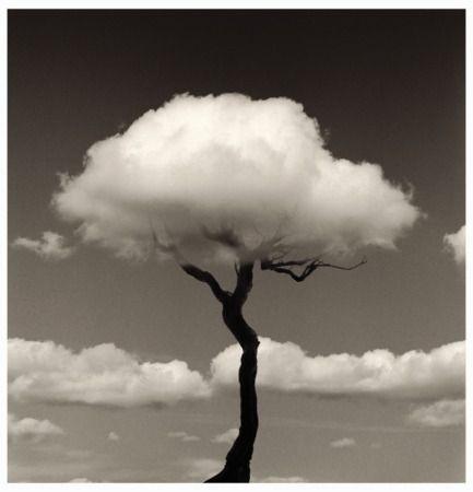 les arbres ne grimpent pas au ciel !Et pourtant... by Chema Madoz