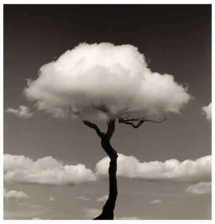 Rain Clouds over a dead tree. love the irony of this image. Chema Madoz: