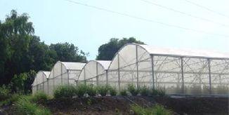 serre tunnel, tunnel richel, serre bi tunnel, vente serre tunnel, vente tunnel agricole, tunnels agricoles, tunnel serres, tunnel serre, tunnel plastique professionnel, tunnel plastique agricole, tunnel maraicher