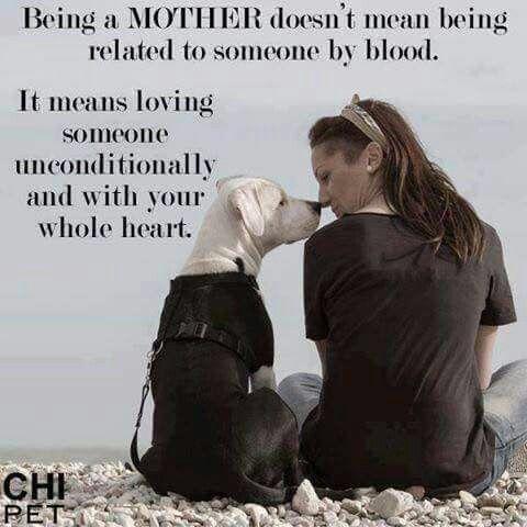 Love my 2 dogs