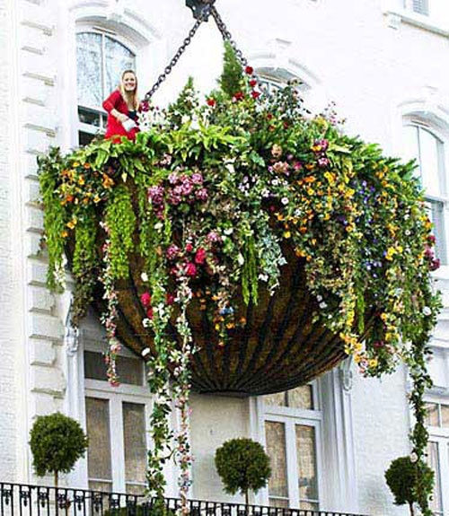 whhhoooaaa world 39 s largest hanging flower basket at the