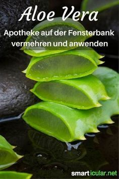 Gesunde Aloe vera kannst du auf der Fensterbank ziehen und leicht für deine Ges…