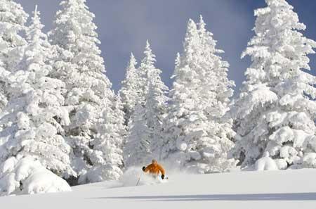 Skiing Vail Ski Area, Colorado. Beautiful snow covered Trees! Love love love it! ttp://www.encompassmag.com/aaa/ski_area_info.html?id=23 http://www.lifthousevail.com/