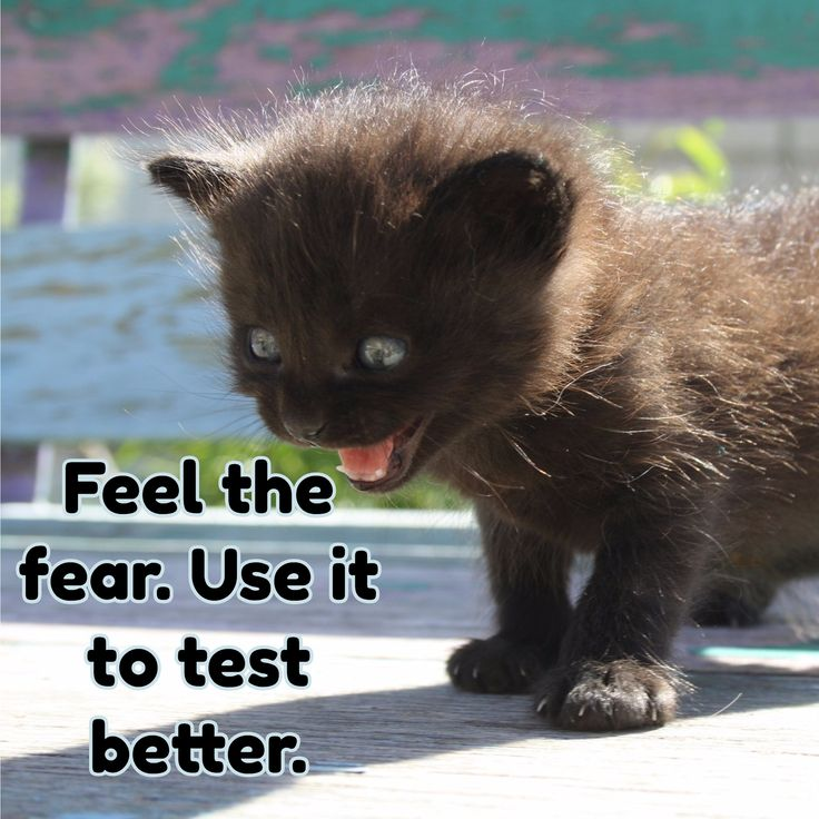 Feel the fear. Use it to test better.