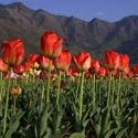est of Kashmir Holiday Package for 6 Days - http://www.nitworldwideholidays.com/kashmir-tour-packages/kashmir-holidays.html