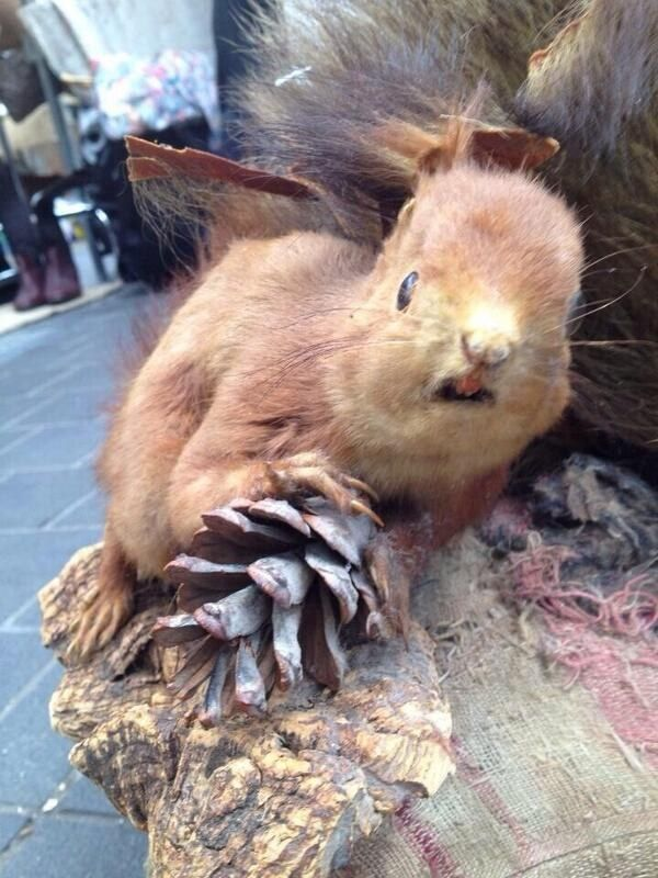 """The """"my whole world is spinning"""" hangover.   22 Types Of Hangovers Illustrated By Crap Taxidermy"""