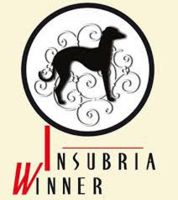 Insubria Winner