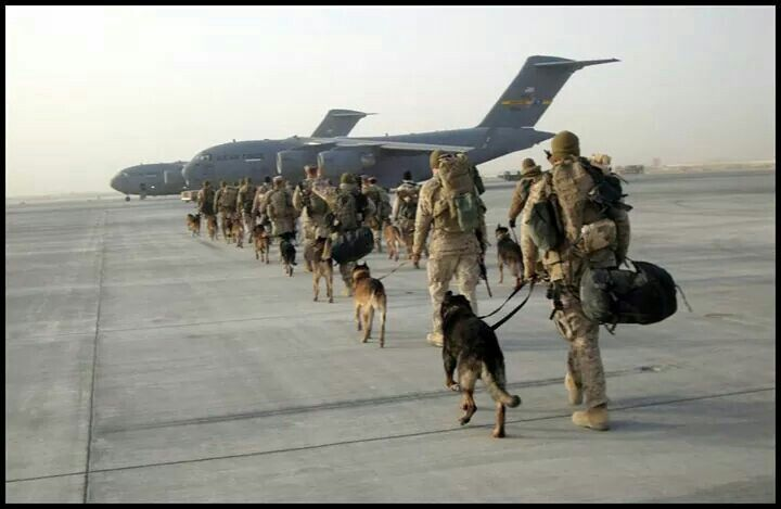 Military canines - K9's in fact - and so eager to please. #MilitaryMonday