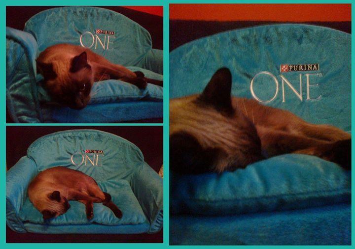 A na prezencie od Streetcom śpię tak! #kampaniapurinaone https://www.facebook.com/photo.php?fbid=741647962512259&set=o.145945315936&type=1&ref=nf