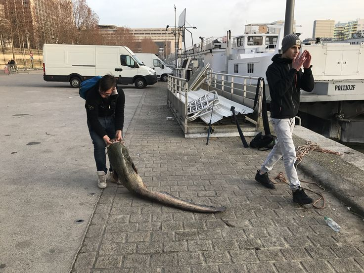 Bonne pêche... Silure remis à l'eau après les photos# bord de Seine # Gare de Lyon