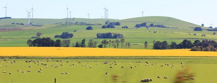 Canola fields & wind farm, Victoria's western district, Australia