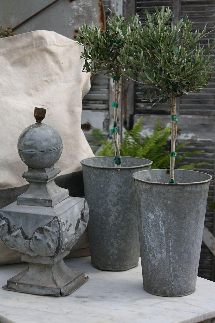 Olivier En Pot op Pinterest - Plante artificielle exterieur, Planter ...