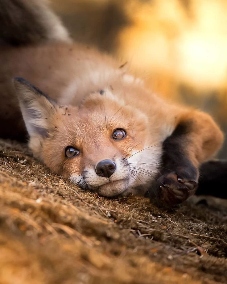 Finnischer Fotograf beweist, dass Feenwälder in Finnland echt sind (41 Bilder)   – Animals