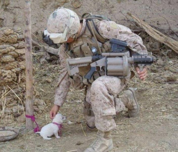 Great Soldier Army Adorable Dog - a91eb3ee640b1f457b71adb9a9de3f8b--adorable-animals-adorable-puppies  2018_974476  .jpg