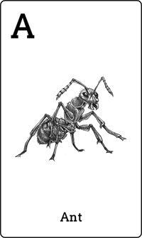 Animal 4D+ Card Ant