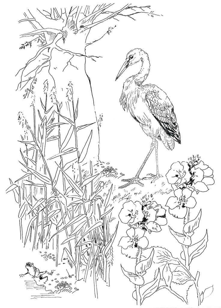 Pippa Rossi Lost Garden Stork And Frog