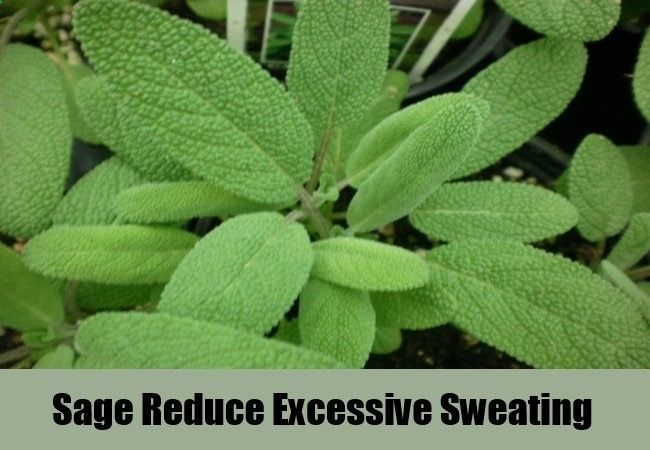 Sage herb for excessive sweating remedies