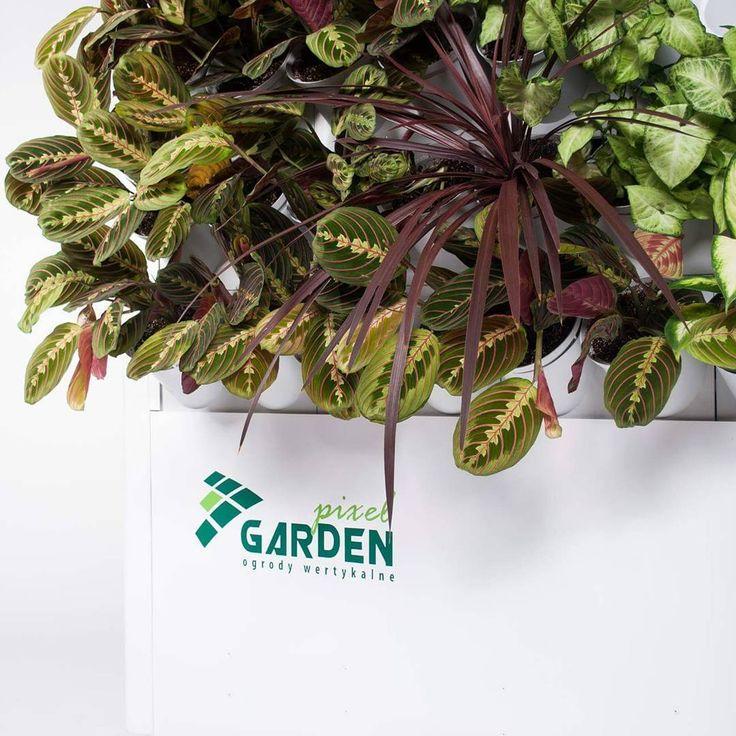 Pixel Garden - vertical gardening :-) #verticalgarden #gardenspot #gardening #plantsindoors #interiordesign #greenwall #verticalgardening #plantsathome #pixelgarden #interiordecor #flowers