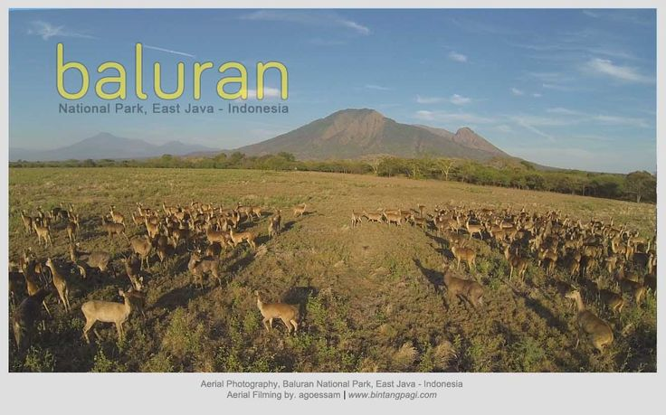 Baluran National Park - Beautiful Indonesia [Aerial Cinematography]