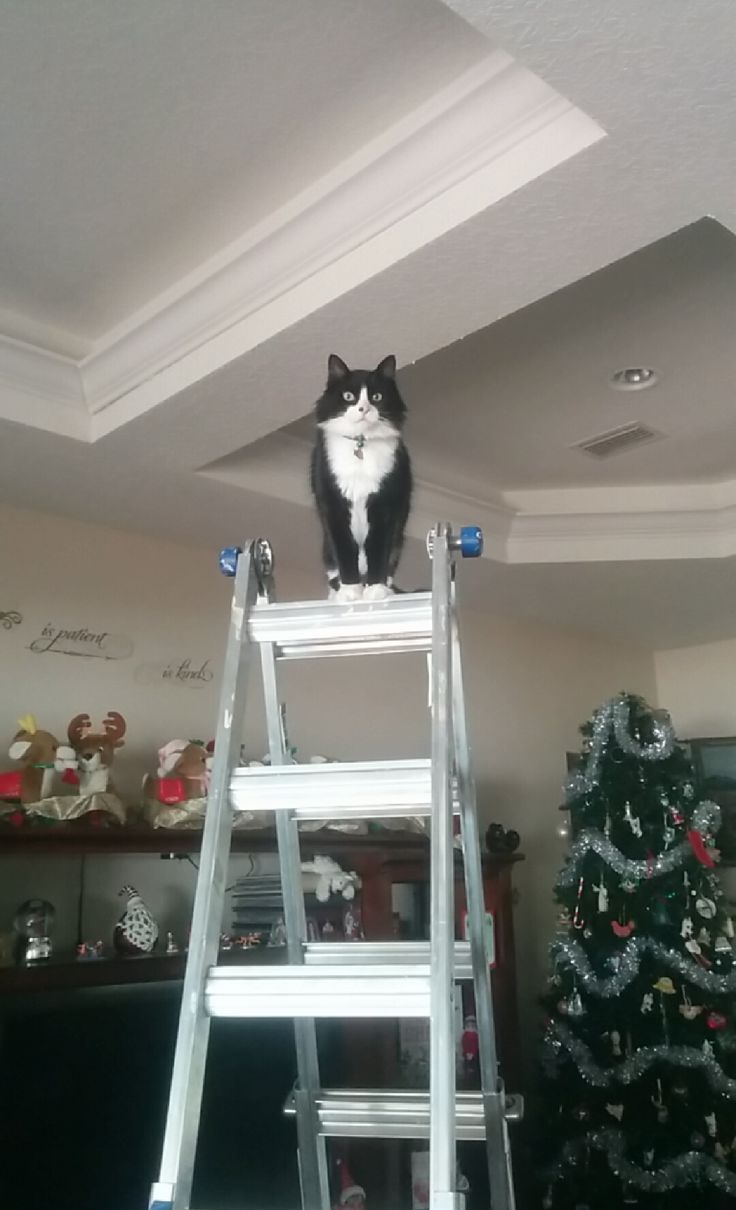 Commodus Emperor of the cats   http://ift.tt/1pKuYNS via /r/cats http://ift.tt/1nNbV3P  cats funny pictures