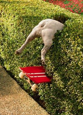 Bulldog crash landing