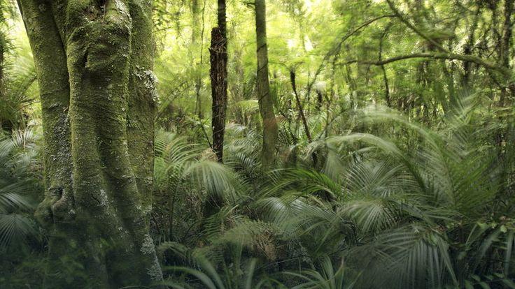 Naukowcy alarmują: amazońskie lasy tracą zdolność pochłaniania CO2 #nauka