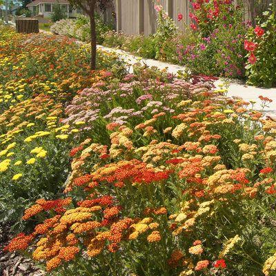 9 best hellstrip gardens