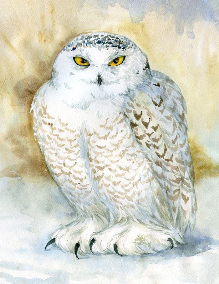 Snowy Owl by ArtGalla on DeviantArt