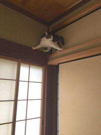 我が家を上から覗き見る忍者が現れた!?その可愛い正体とは?「何してんの」「吉田沙保里だ」 - Togetterまとめ