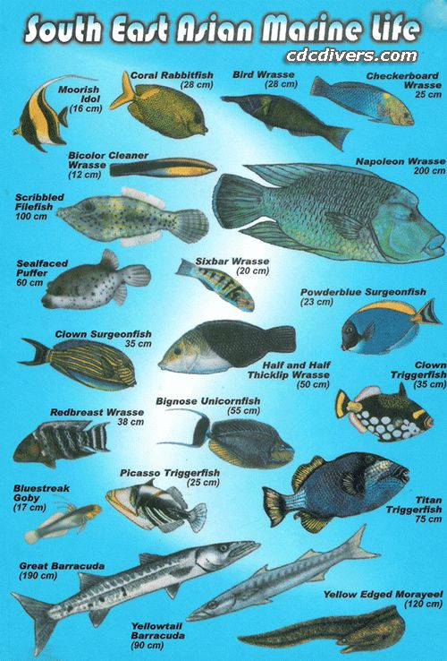 Best 25 marine fish ideas on pinterest mandarin fish for Ocean fish names