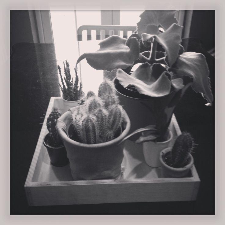 Cactus symphony