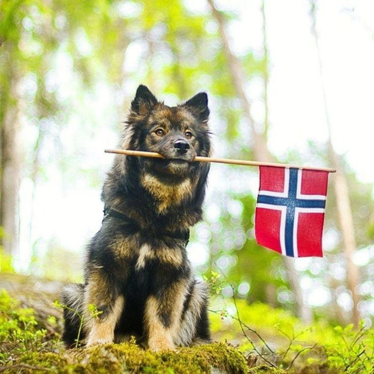 New in the life of Keela! 17th of may was Norways Constitution day!