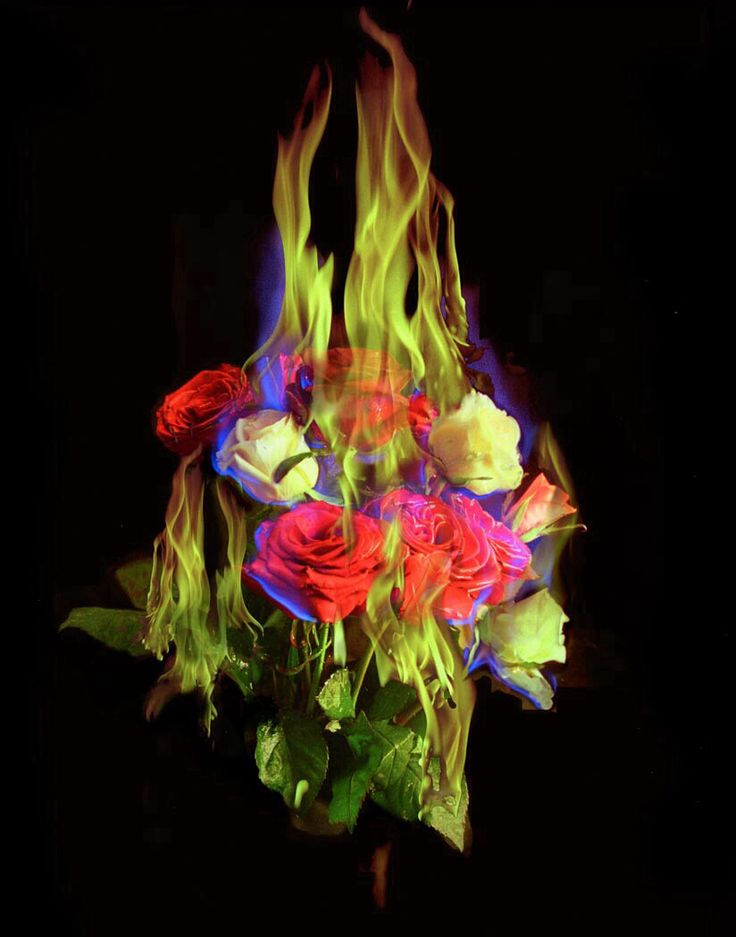 Mat Collishaw, Burning Flowers 2004