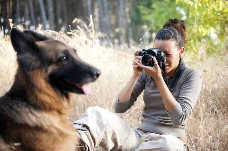 7 maneiras criativas de ajudar associações de animais