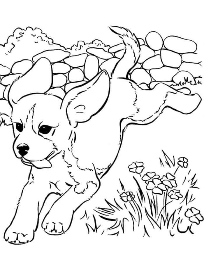Dog Coloring Pages Realistic from Dogs Coloring Pages For ...