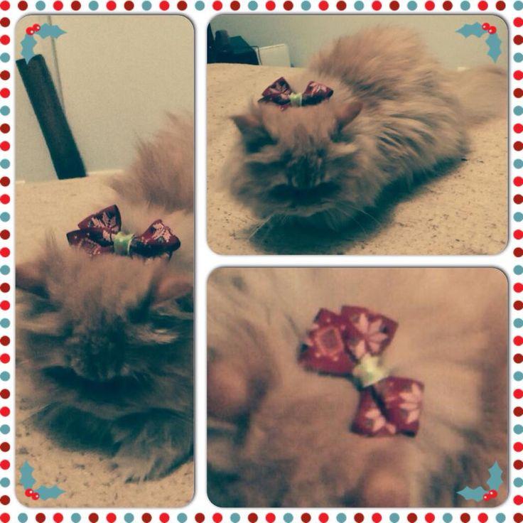 Lupita con uno de nuestros moños navideños. #Gatos #Moños #Navidad #Accesorios