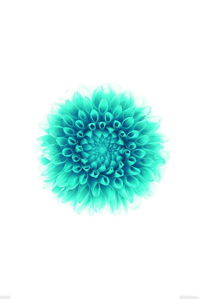 FreeiOS7 | ac96-wallpaper-apple-iphone6-plus-ios8-flower-green | freeios7.com