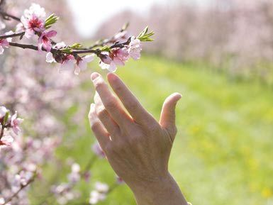First Day of Spring (Vernal Equinox) - Fun Facts
