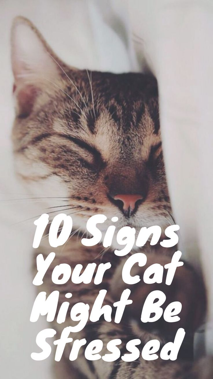 Signs Your Cat Might Be Stressed Cats Kittens Funny Funny Cats