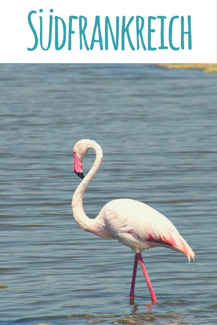 Flamingo / Artikel im Reiseblog: Provence, Côte d'Azur & Camargue  - 16 Gründe für Urlaub in Südfrankreich