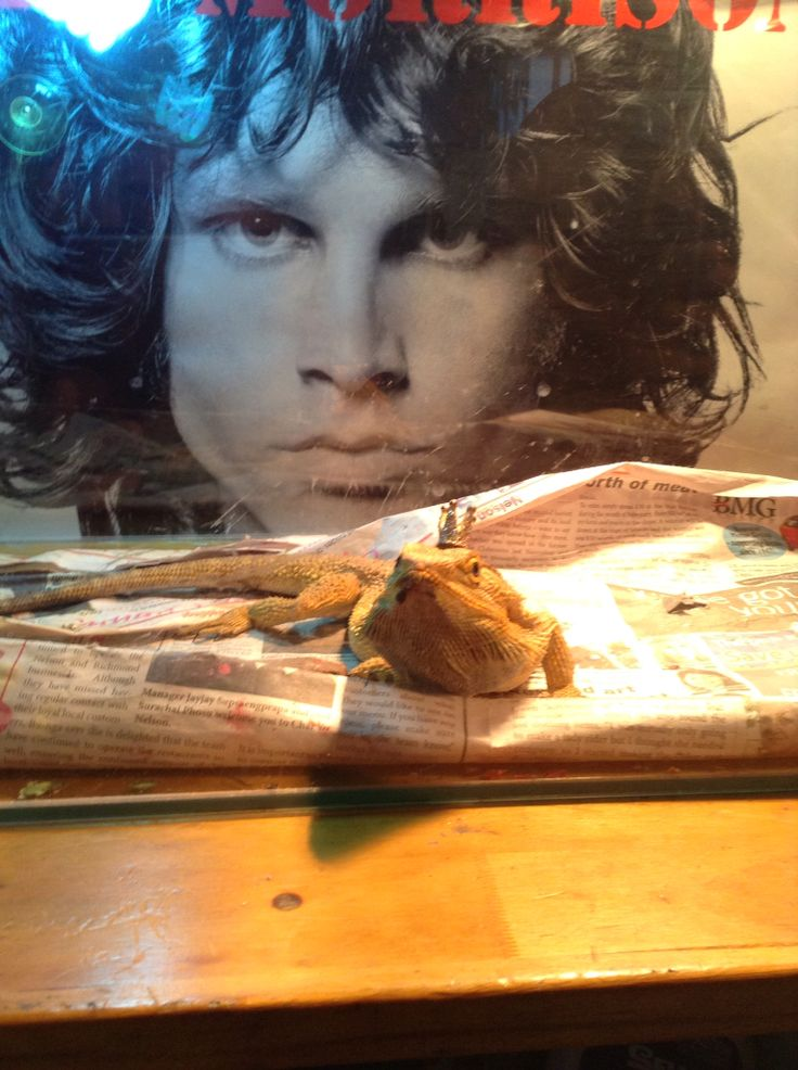 I am the Lizard King, I can do anything!