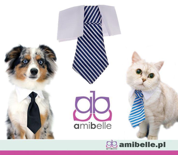 Przy specjalnych okazjach odpowiedni strój obowiązuje wszystkich domowników.Nasze krawaty dostępne są w czterech modnych kolorach: liliowym, błękitnym, granatowym i czerwonym. Zobaczcie sami na www.amibelle.pl