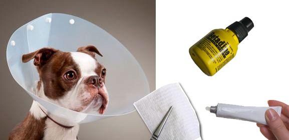 Cómo #curar #heridas en tu #mascota #blog #perros #gatos #mascotas #consejos