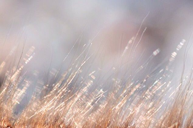 Foto Fairy dust | Blinka Lilla