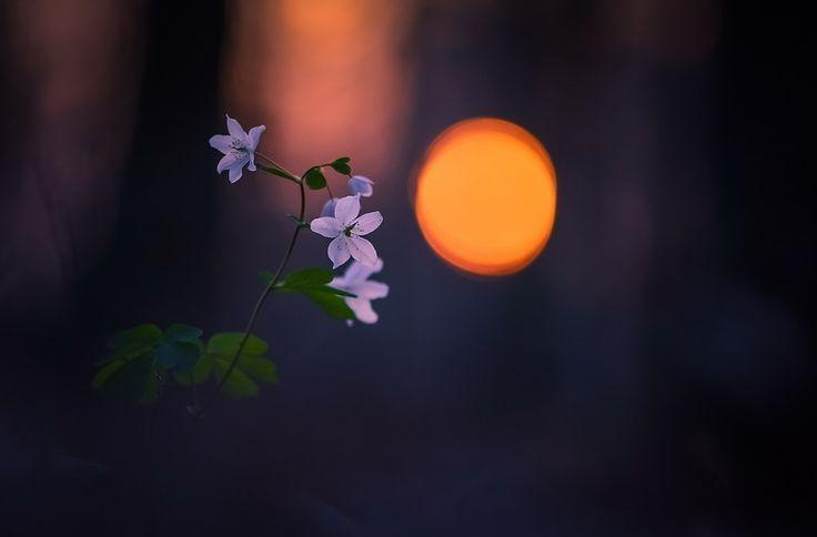 Фотография фотографа Вячеслав Мищенко - Еще один миг заката