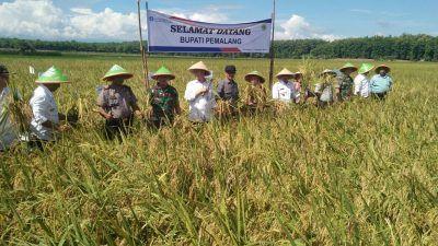 Polsek Bantarbolang Laksanakan Pengamanan Panenraya yang dihadiri Muspida dan Bank Indonesia.